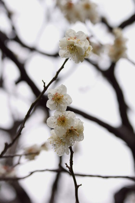 遅れてきた春