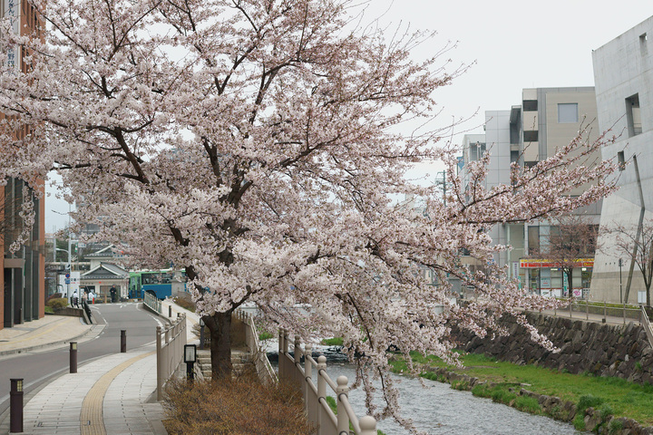 信州の遅い春
