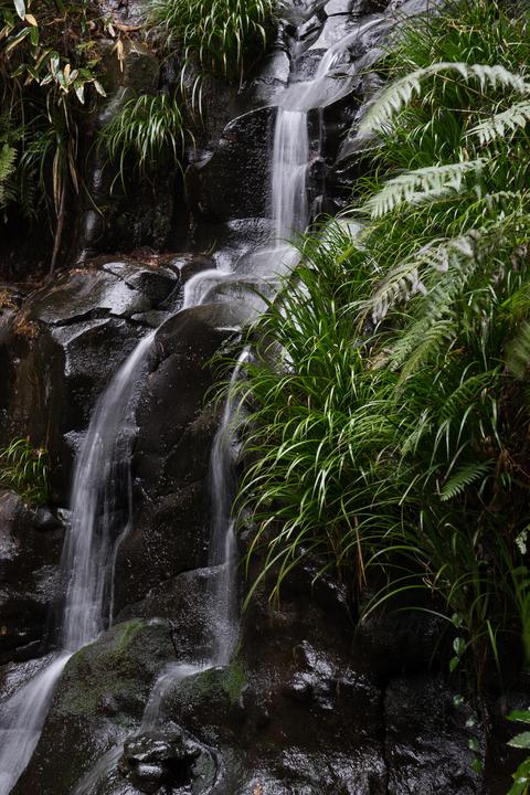雨の河津七滝