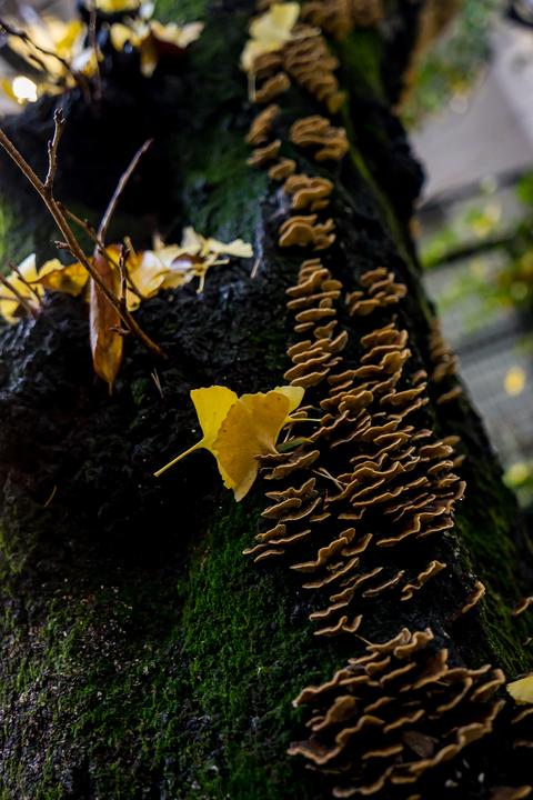 Amber Fall