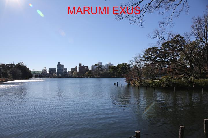 MARUMI EXUS
