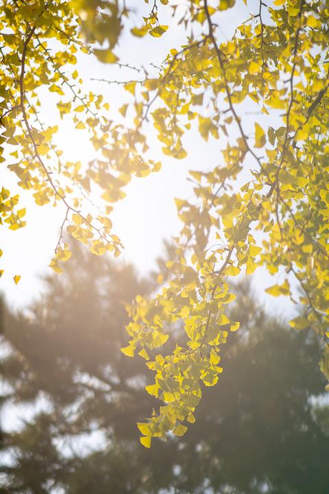 次第に色づく秋